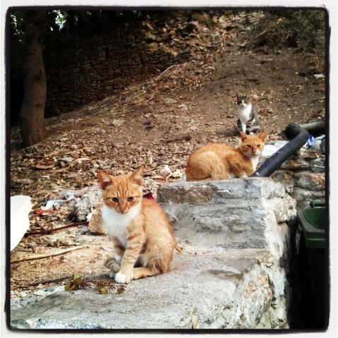 Cats of Symi