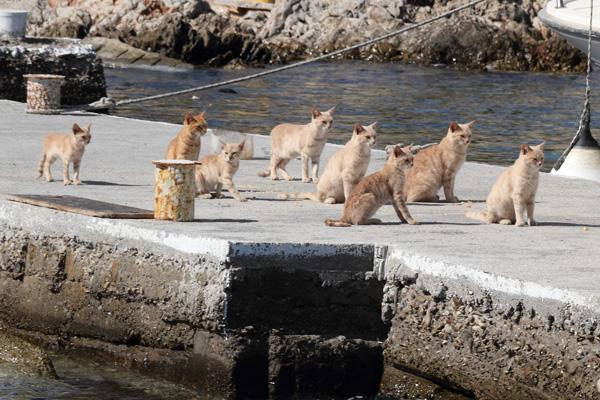 Sesklio island cats