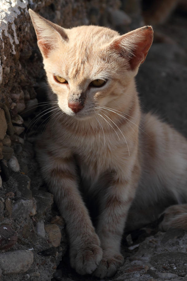 Cat Of The Day 171012 3